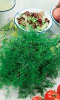 Укроп НЕЖНОСТЬ - срезанная зелень долго держит аромат!