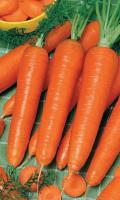 Морковь ЗАЙКА БАЛАЛАЙКА