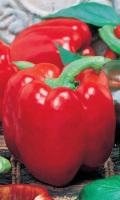 Перец ЭКСТРЕМАЛ - отличная завязываемость плодов, даже в экстремальных условиях!