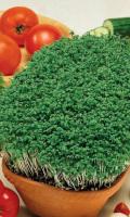 Салат кресс-салат ТЕМП