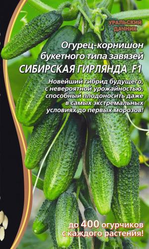 Огурец СИБИРСКАЯ ГИРЛЯНДА F1 - УНИКАЛЬНЫЙ