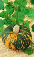 Тыква ЗОРЬКА - сладкая, каротина больше чем в моркови, хранится до весны!