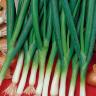 Лук на зелень БАЙКАЛ - можно выращивать круглый год!