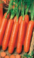 Морковь НАНТСКАЯ 4 красная